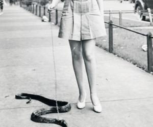 snake, vintage, and pet image