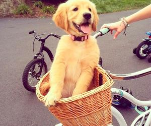 adorable