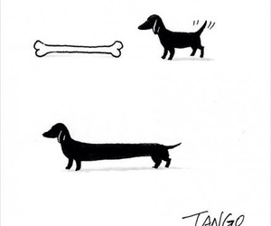 dog, bone, and funny image