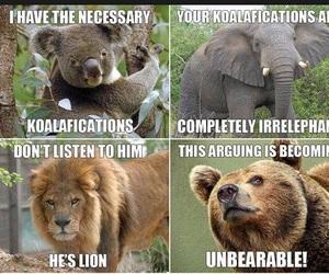 animal and funny image