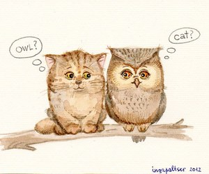 owl and cat image