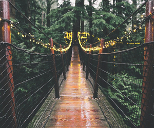 bridge, forest, and light image