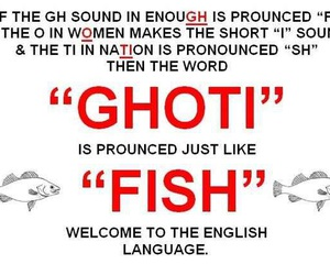 english, fish, and funny image
