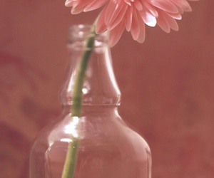 bottle, flower, and home image