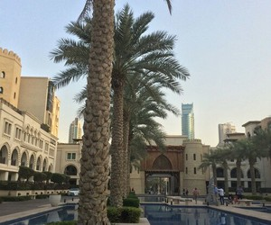 palm trees, luxury, and places image