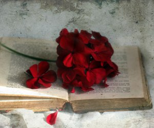 flowers, book, and red image