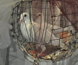 cage, eternity, and pigeons image