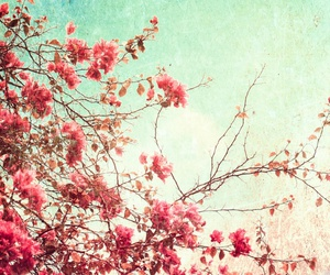 beautiful, cherry blossom, and flowers image