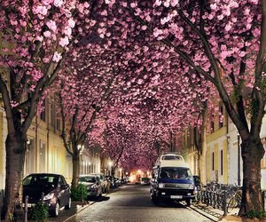 pink, flowers, and street image