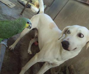 dog, kinder, and parrot image