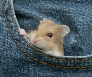 hamster, pocket, and cute image