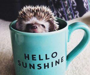 adorable, animal, and hedgehog image