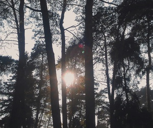 nature, summer, and trees image