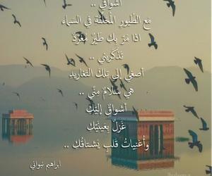 arabic, birds, and nostalgia image