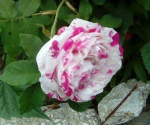 flores and naturaleza image