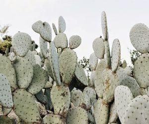 cacti, inspiration, and plants image