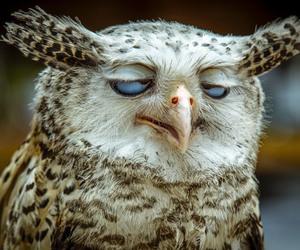 owl, funny, and animal image