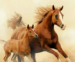 Cavalli, pony, and marroni image