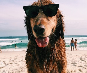 dog, animals, and summer image