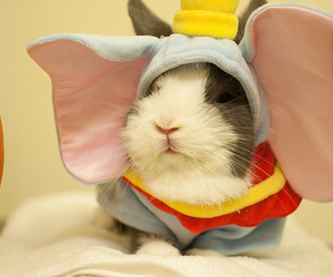 cute, dumbo, and bunny image