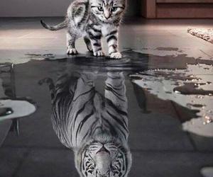 big, cat, and tiger image