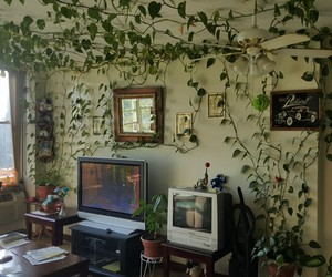 plants, green, and room image