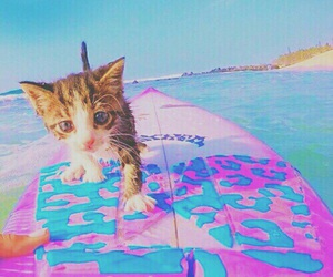 cat, summer, and animal image