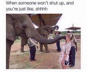 funny, lol, and elephant image