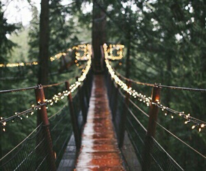light, bridge, and nature image