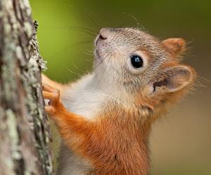 squirrel, animal, and cute animals image