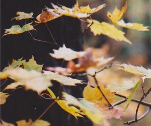 indie, leaves, and vintage image