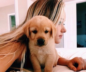 adorable, blonde, and golden retriever image