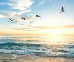 sea, beach, and bird image