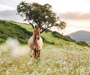 horse, nature, and love image