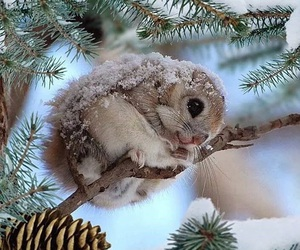 winter, animal, and squirrel image