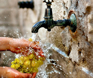 grapes, fruit, and water image