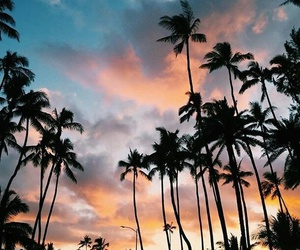 palms, summer, and palm trees image