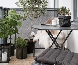 balcony, outdoors, and plants image