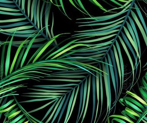 background, leaves, and tropical wallpaper image