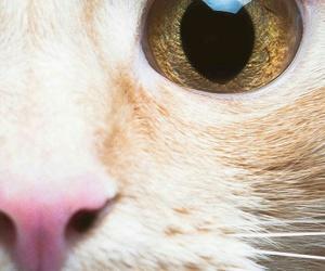 animal, felinos, and Gatos image