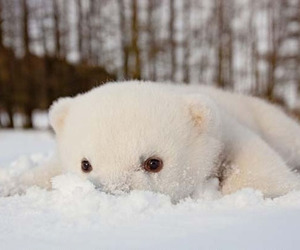 cute, bear, and snow image