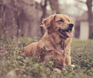amazing, beautifull, and dog image