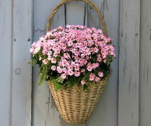 decoracion, nature, and flores image