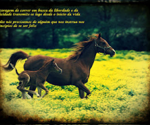 beautiful, frases, and horses image