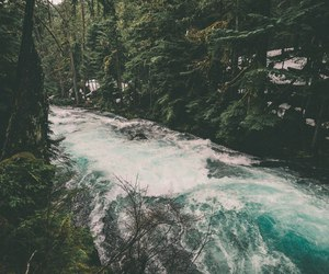 jungle, nature, and river image