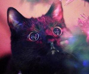 cat, christmas, and shiny image