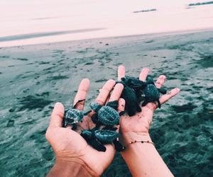 turtle, beach, and animal image