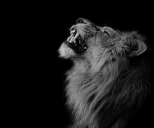king, lion, and strong image