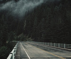 calm, foggy, and forest image