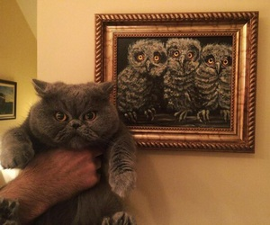 animals, inspiration, and cats image